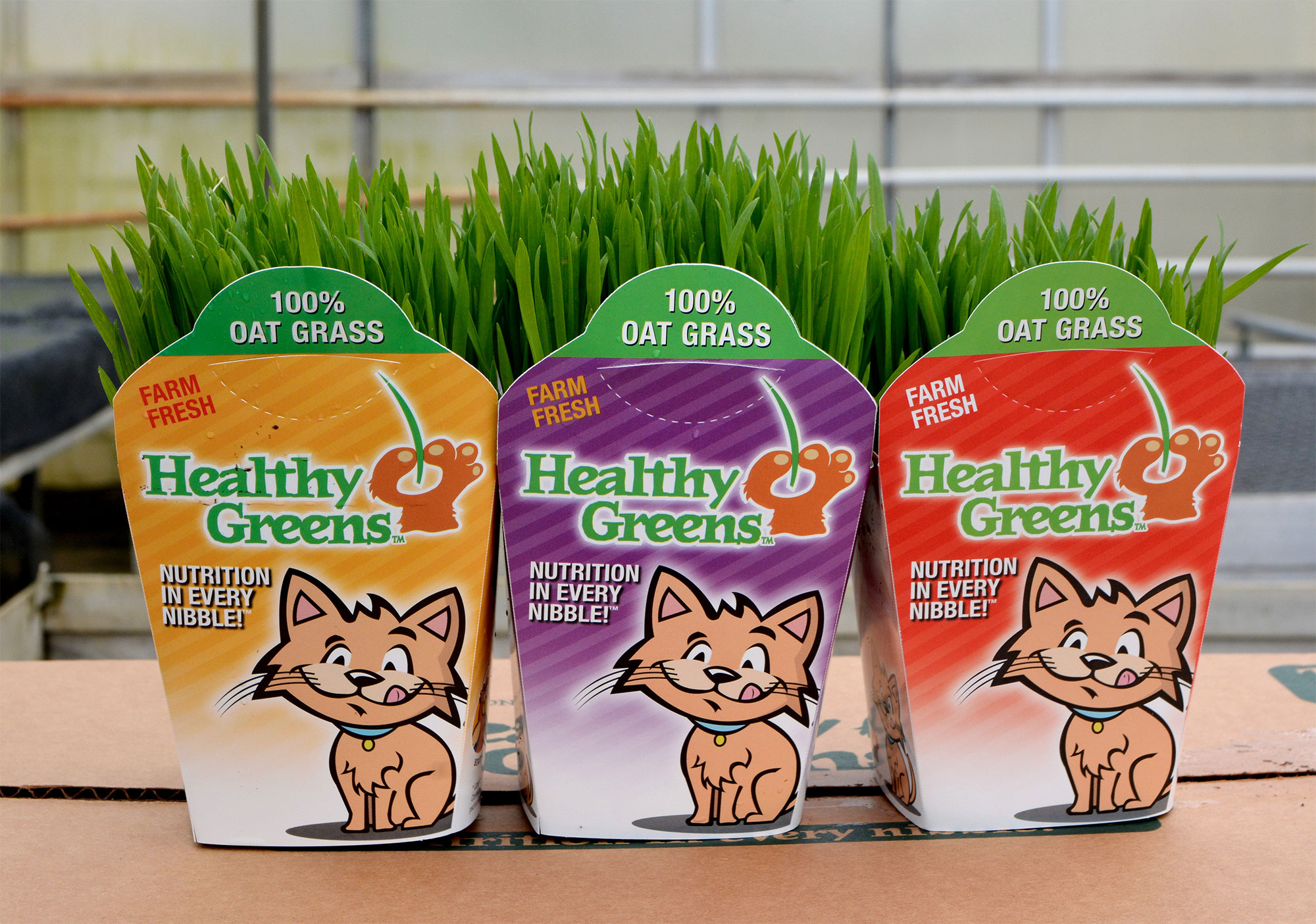 agripet-healthy-greens-cat-dog-pet-grass-04